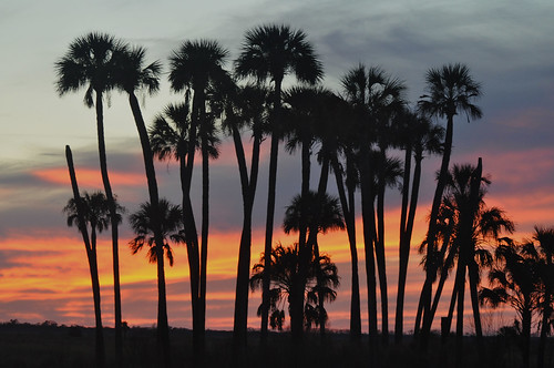 trees sunset nature palm marsh