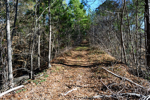 wooden timber trestle abandoned railroad train easttexas zavalla texas disused rightofway row grade railway southern pacific rockland branch united states north america