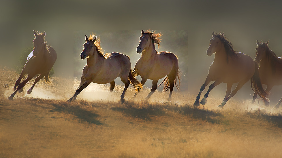 ... graciemagnussen wild horses wallpapers 15_1_1_1_1_1_1_1_1.jpg | by graciemagnussen