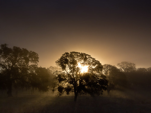 california trees fog sunrise landscape sierra oaks catheysvalley mercedcounty highyway140