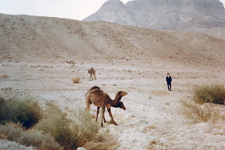 More Camels, Israel