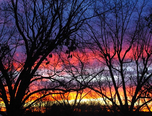 trees winter clouds sunrise vanburen arkansas pecan
