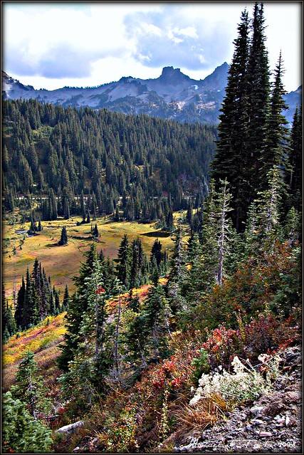 Paradise Valley Mt. Rainer