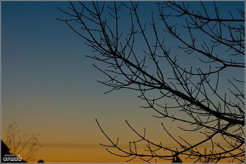sunset tree home silhouette night evening sigma70200mmf28 eos400d canondigitalrebelxti blacklickoh