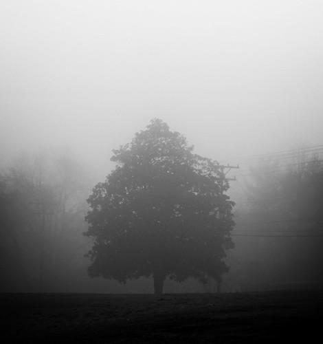travelersrest southcarolina canon 60d 50mm water morning nature fog mist foggy tree cloudy mygearandme