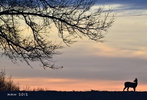 sunset tree deer