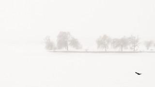 Fog (with bird) | by Brînzei