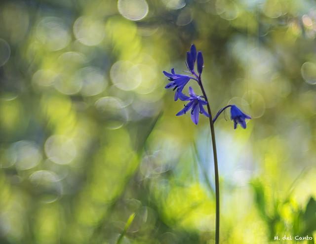 violet by Zeiss Talon 85mm