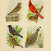The book of birds, common birds of town and country and American game birds