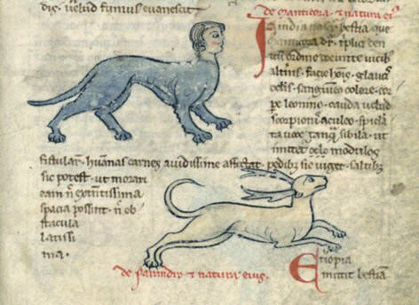 Manticore from a medieval bestiary