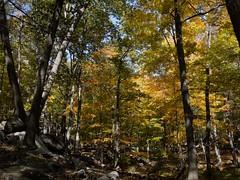 日, 2010-10-17 12:42 - Bald MountainからRamapo-Dundergerg Trailを南下