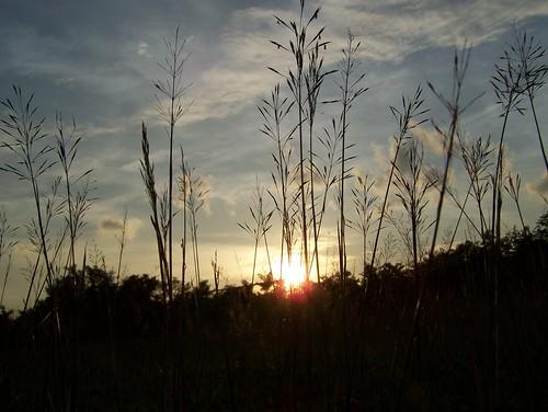 sunset orange sun house reed nature beautiful afternoon kodak ngc fields z650 reedfields