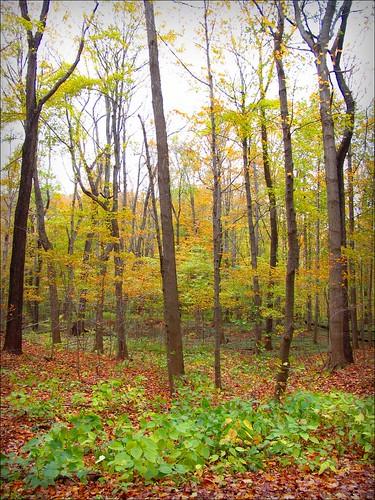 autumn ohio fall ashtabula indiantrails ashtabulacounty ashtabularivergulf