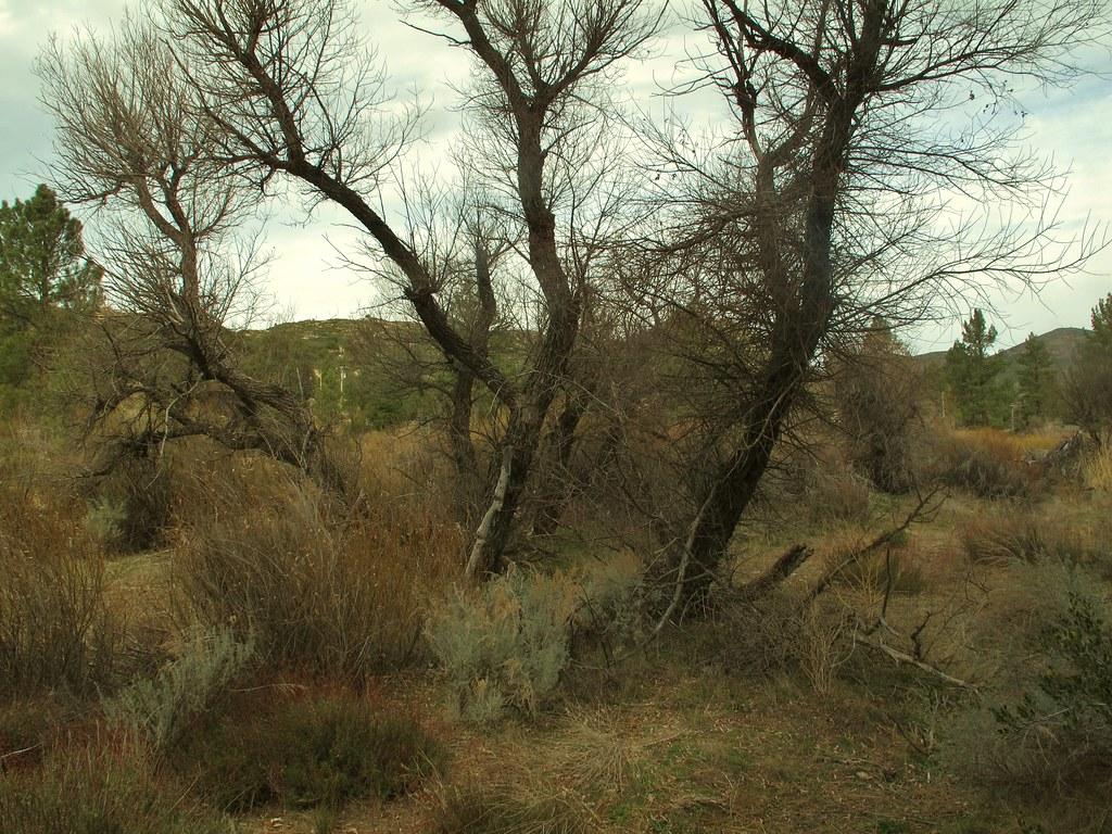 Trees near Pine Creek, Pine Valley. | Robert Carande | Flickr