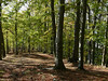 Lesy nad KV, foto: Petr Nejedlý