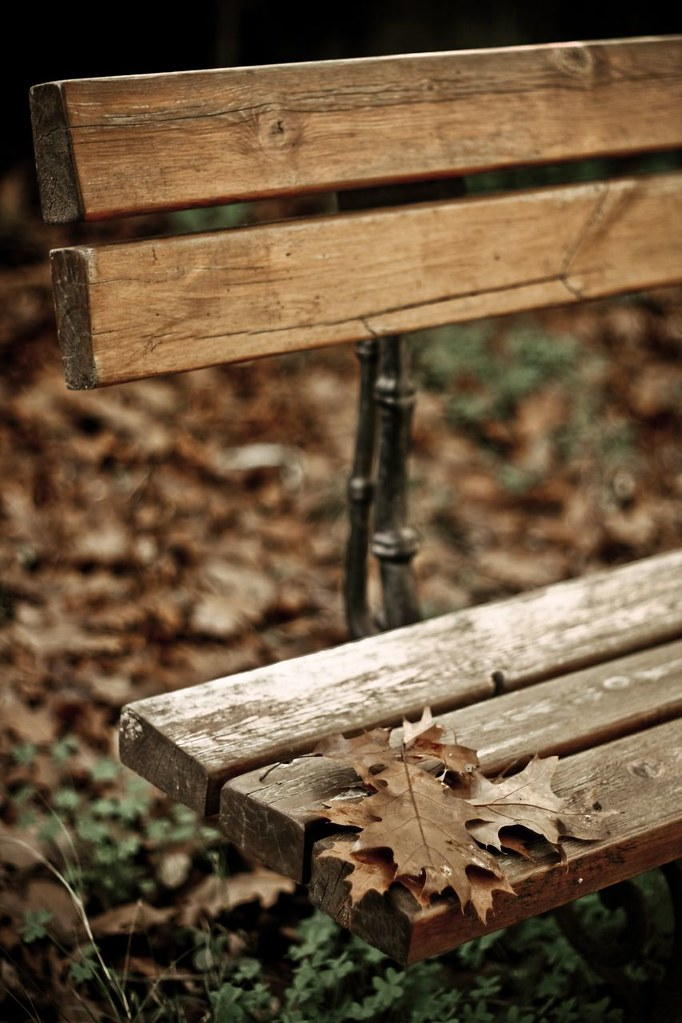 On a windy autumn day by annfrau