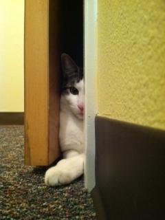 I'm so sneaky... | by astreetanimalclinic