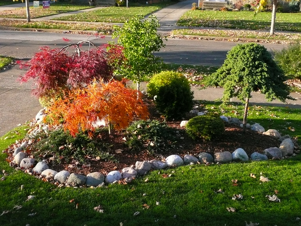 Japanese Maple Fall Colors Acer Palmatum Viridis Orange Flickr