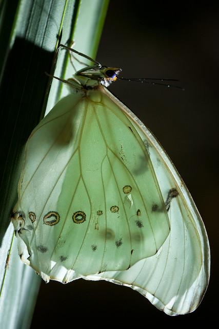 Butterfly Palace 9048