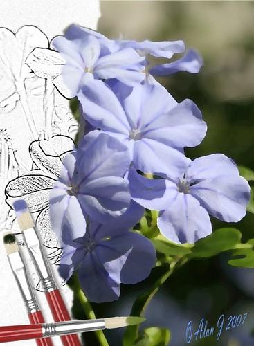 flower photoshop canon niceshot florida 7d mygearandme 100mmmacrof28lisusm