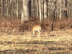 日, 2011-12-25 13:23 - 1777 trail