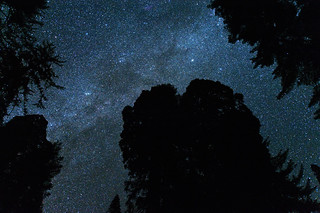 Milky Way above the Grant Grove (Kings Canyon National Park) | by kern.justin