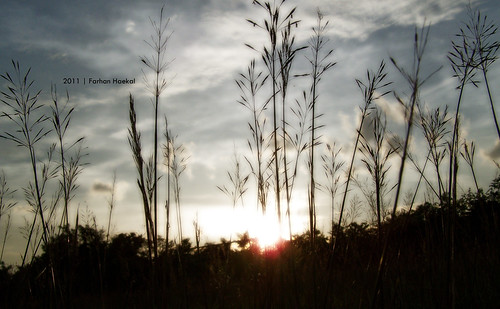 sunset orange sun house reed nature beautiful photoshop afternoon kodak edited elements fields z650 reedfields