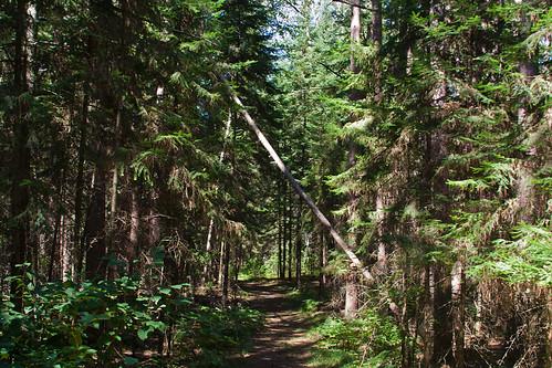 park tree minnesota forest trail schoolcraftstatepark