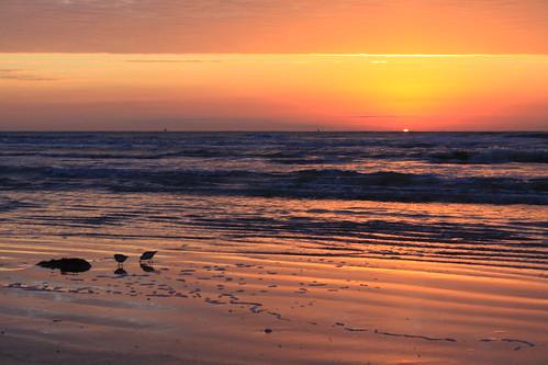 galveston reflection bird beach gulfofmexico nature birds sunrise sand texas gulf solstice coastal sandpiper galvestonisland sandpipers wooten jamaicabeach greatnature coastallife texasbeaches gulftnc09 lifetnc10 gulfconservation dailynaturetnc11 birdstnc11 oceanstnc dailynaturetnc12 ronwooten ronwootenphotography