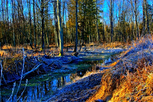 county winter sunset usa ice forest sunrise moss twilight midwest stream warm michigan january equipment research moonrise asparagus hart 2012 oceana westernmichigan okemos midmichigan