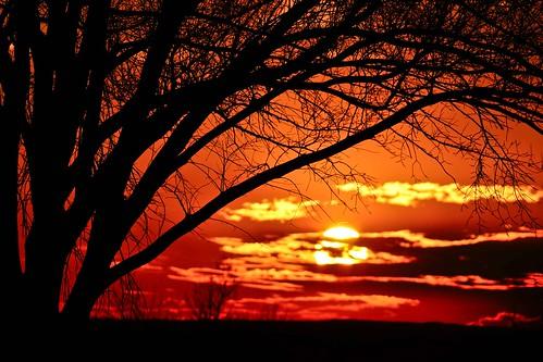 sunset sun tree up closeup warm close warmth