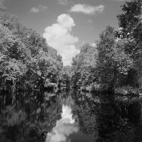 landscape blackwhite florida scenic kissimmee fomapan reedycreek seagull4a103 reedycreekenvironmentalstudycenter