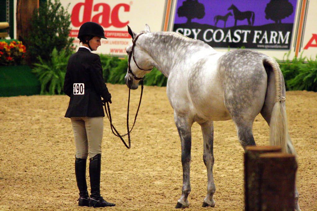 Alltech National Horse Show Revisited | Lexington, KY ...