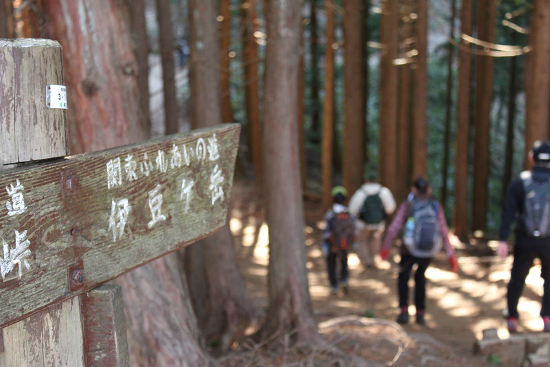 伊豆ヶ岳へ