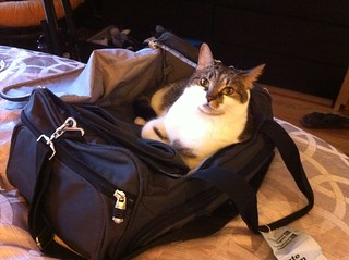 Travel Cat is ready for her trip! | by Flyinace2000