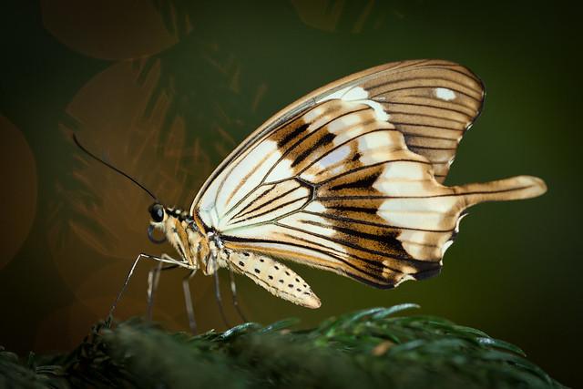 Butterfly Palace 9166