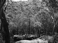 Forest Island Bushwalk - Royal National Park Sydney