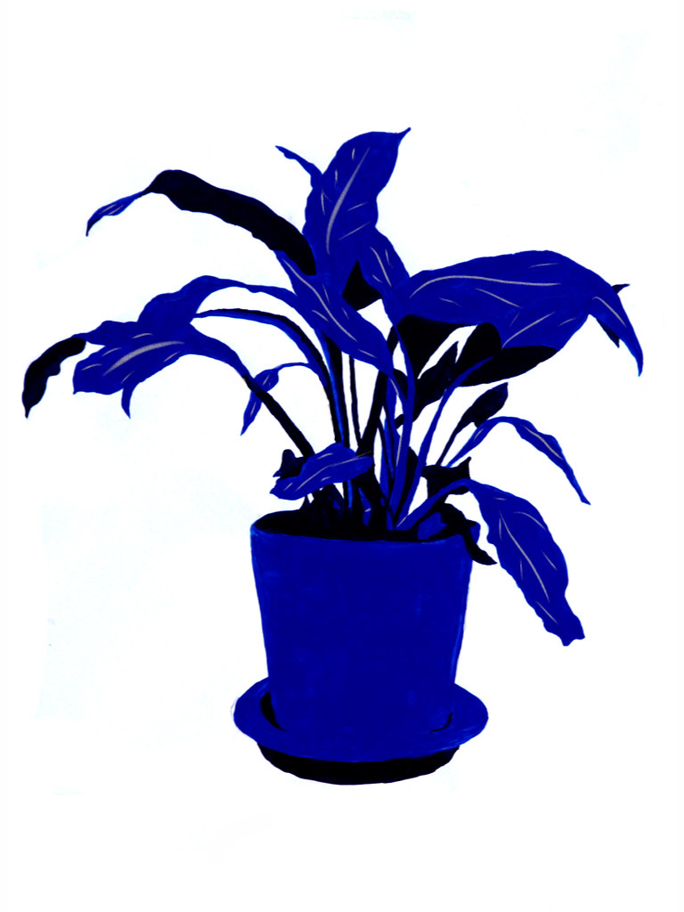 Blue Peace Lilly