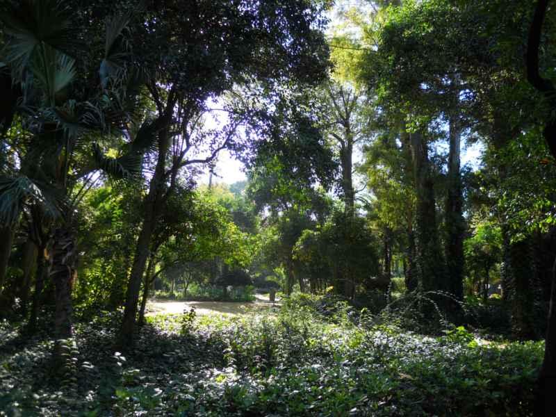 Parque Maria Luisa Sevilla 6