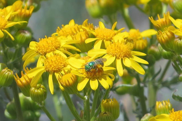 Green Bee in a Bouquet