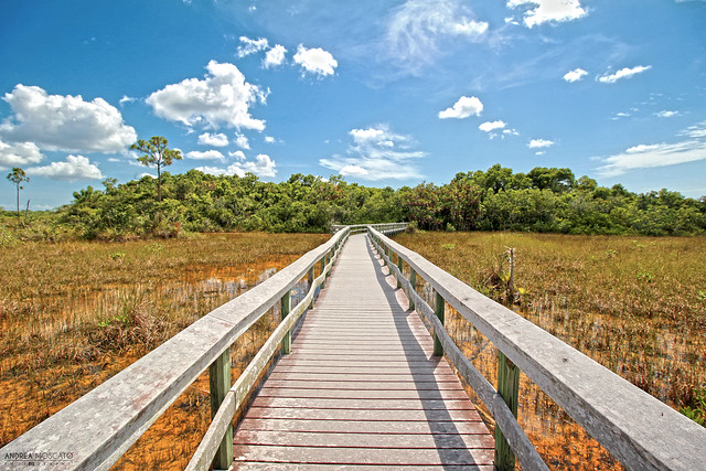 Mahogany Hammock Trail - Everglades National Park, Florida