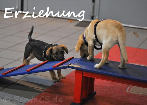 Monatsmotto / monthly motto november Erziehung / rearing