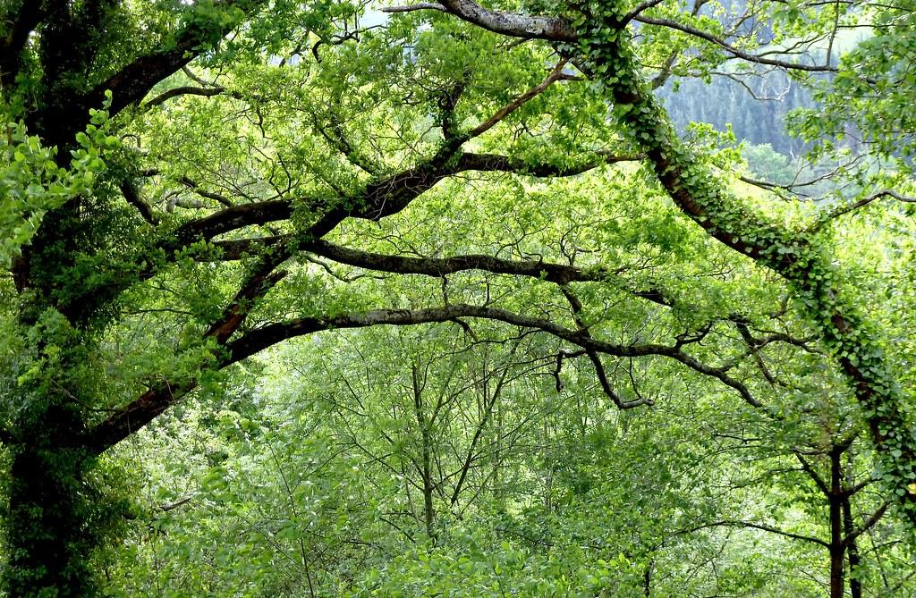 Bosque autóctono en el Jardín de Iturraran