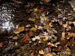 日, 2010-10-17 12:48 - Bald MountainからRamapo-Dundergerg Trailを南下