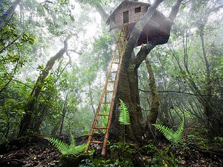 Treehouse   by Dan Russell-Pinson