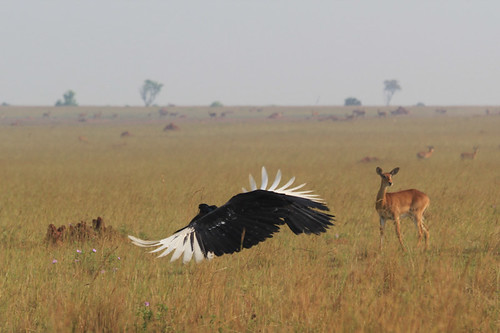 africa park wildlife falls national uganda uga murchison peaceonearthorg