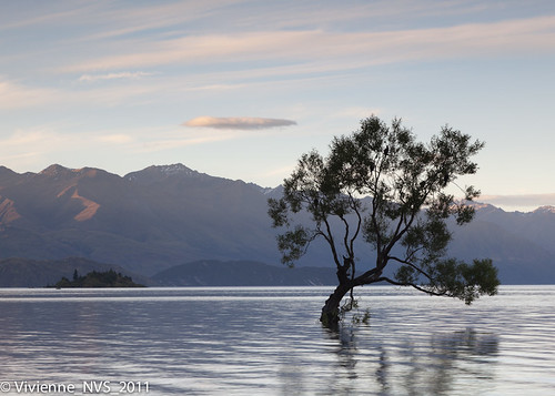 sunset newzealand lake tree birds cormorants wanaka shags lakewanaka lateafternoon roysbay rubyisland gotbitheretoogrr darnmosquitoes