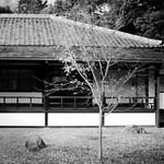閑院宮の秋 #5