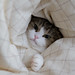 i'm never going to get out of bed by neko-yanagi