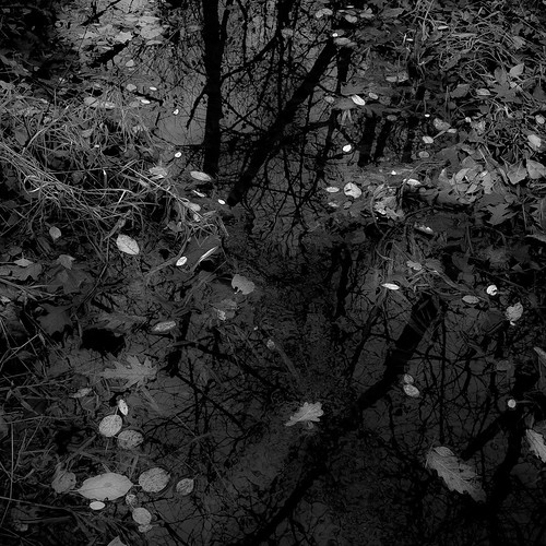autumn trees blackandwhite bw abstract reflection water monochrome grass leaves creek forest square blackwhite woods nikon natural branches explored d5000 noahbw